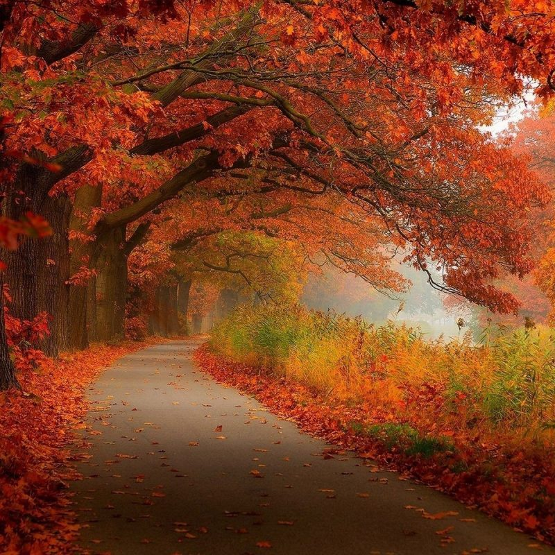 10 Most Popular Fall Foliage Wall Paper FULL HD 1080p For PC Background 2020 free download fall foliage image media file pixelstalk 800x800