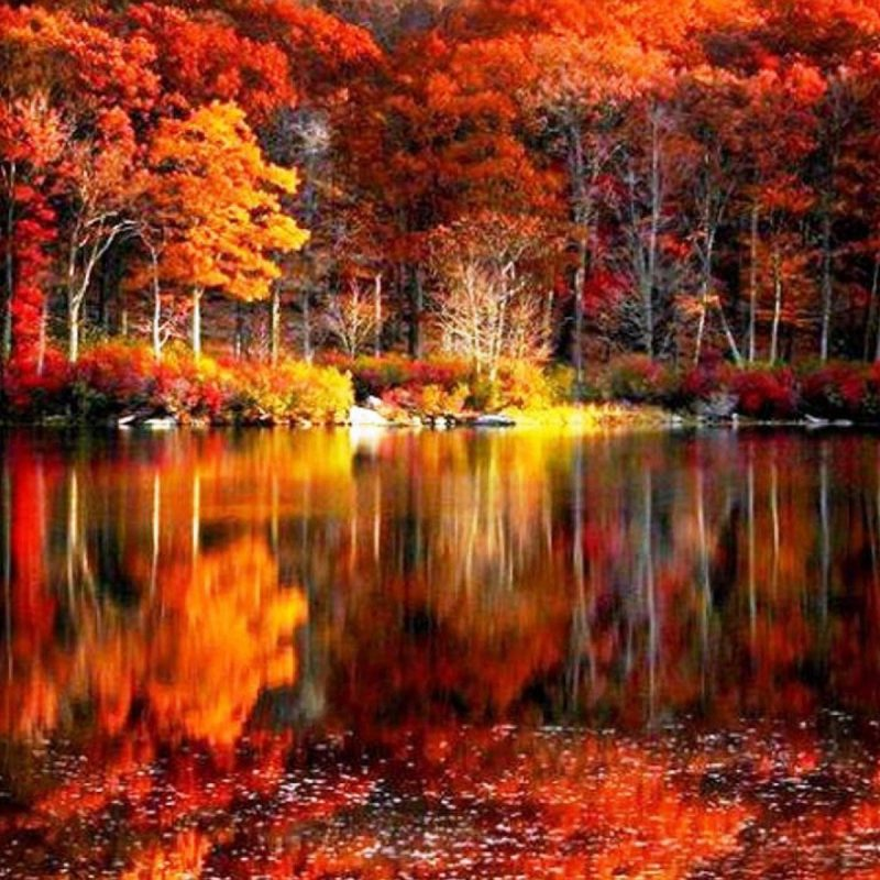 10 Best Beautiful Fall Scenery Images FULL HD 1080p For PC Desktop 2018 free download fall foliage river autumn red lake reflections shore beautiful 800x800