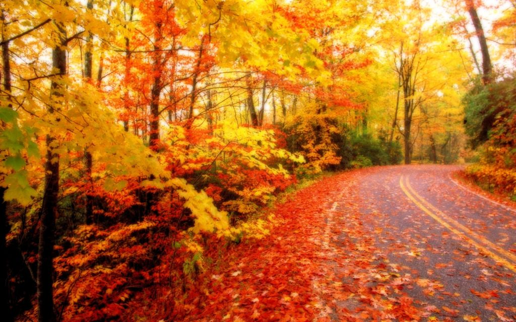 10 New Fall Colors Wallpaper Background FULL HD 1080p For PC Background 2020 free download fall foliage wallpaper for desktop epic car wallpapers 1024x640
