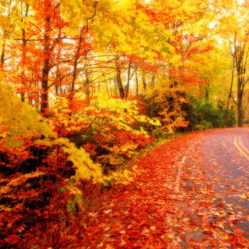10 Best Fall Leaves Desktop Background FULL HD 1920×1080 For PC Desktop 2018 free download fall foliage wallpaper for desktop epic car wallpapers pinterest 1 800x800