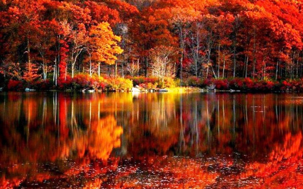 10 New Fall Colors Wallpaper Background FULL HD 1080p For PC Background 2018 free download fall foliage wallpaper free download media file pixelstalk 1024x640