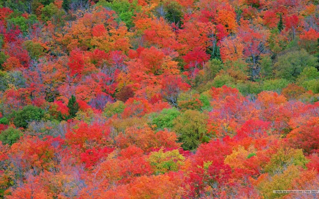 10 New Fall Colors Wallpaper Background FULL HD 1080p For PC Background 2020 free download fall foliage wallpapers for desktop wallpaper cave 1 1024x640