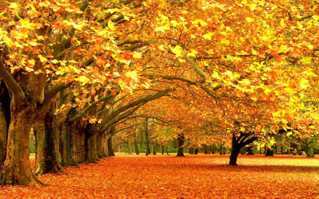 10 Top Fall Leaves Wallpaper For Desktop FULL HD 1080p For PC Background 2018 free download fall foliage wallpapers for desktop wallpaper cave 1024x640
