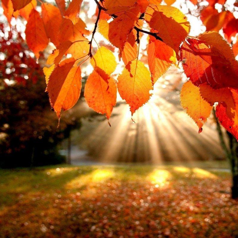 10 Best Fall Leaves Desktop Background FULL HD 1920×1080 For PC Desktop 2018 free download fall foliage wallpapers for desktop wallpaper cave 6 800x800