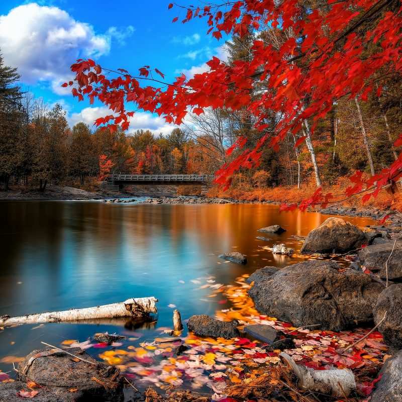 10 Best Fall Foliage Desktop Wallpaper FULL HD 1920×1080 For PC Background 2020 free download fall foliage wallpapers wallpapers hd 3 800x800
