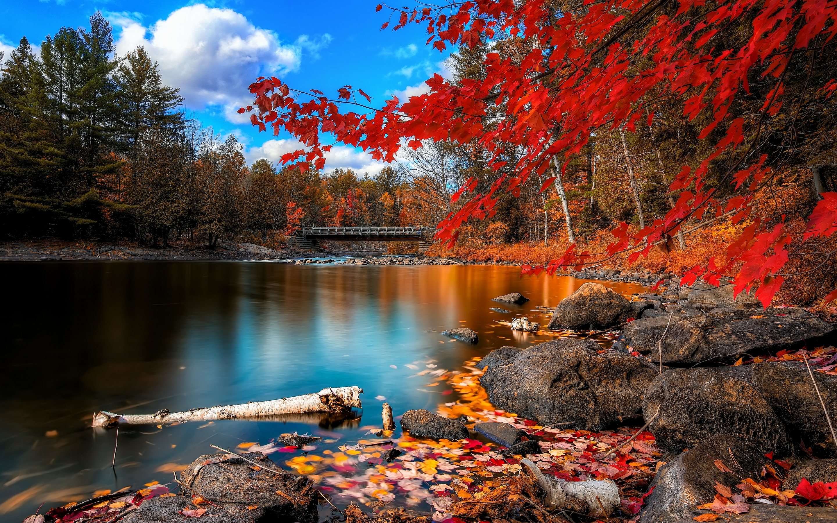 fall foliage wallpapers | wallpapers hd