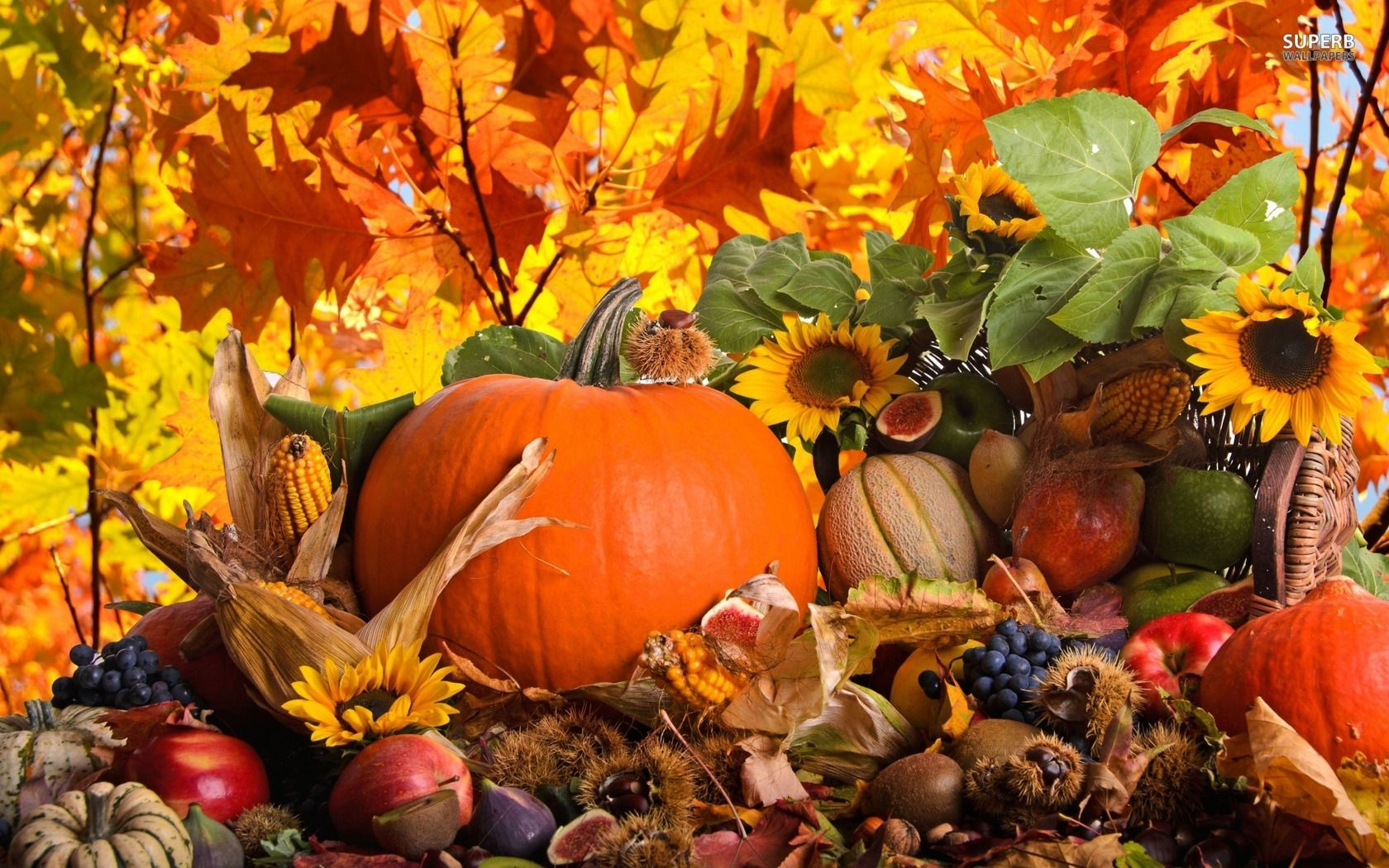 10 Most Popular Fall Harvest Wallpaper Backgrounds FULL HD 1920×1080 For PC Background