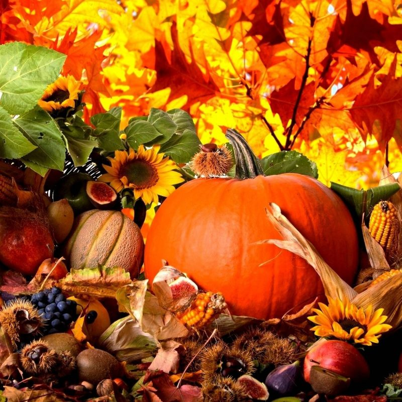 10 Most Popular Fall Harvest Wallpaper Backgrounds FULL HD 1920×1080 For PC Background 2018 free download fall harvest wallpaper c2b7e291a0 download free amazing hd backgrounds for 800x800