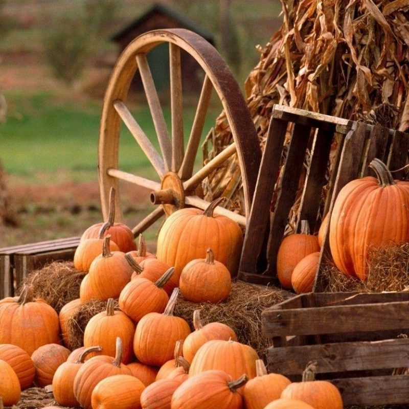 10 Most Popular Fall Harvest Wallpaper Backgrounds FULL HD 1920×1080 For PC Background 2018 free download fall harvest wallpapers wallpaper cave 800x800