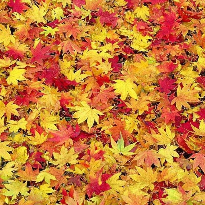 10 Top Fall Leaves Wallpaper Desktop FULL HD 1920×1080 For PC Background 2018 free download fall leaf backgrounds wallpaper desktop leaves of computer screen 800x800