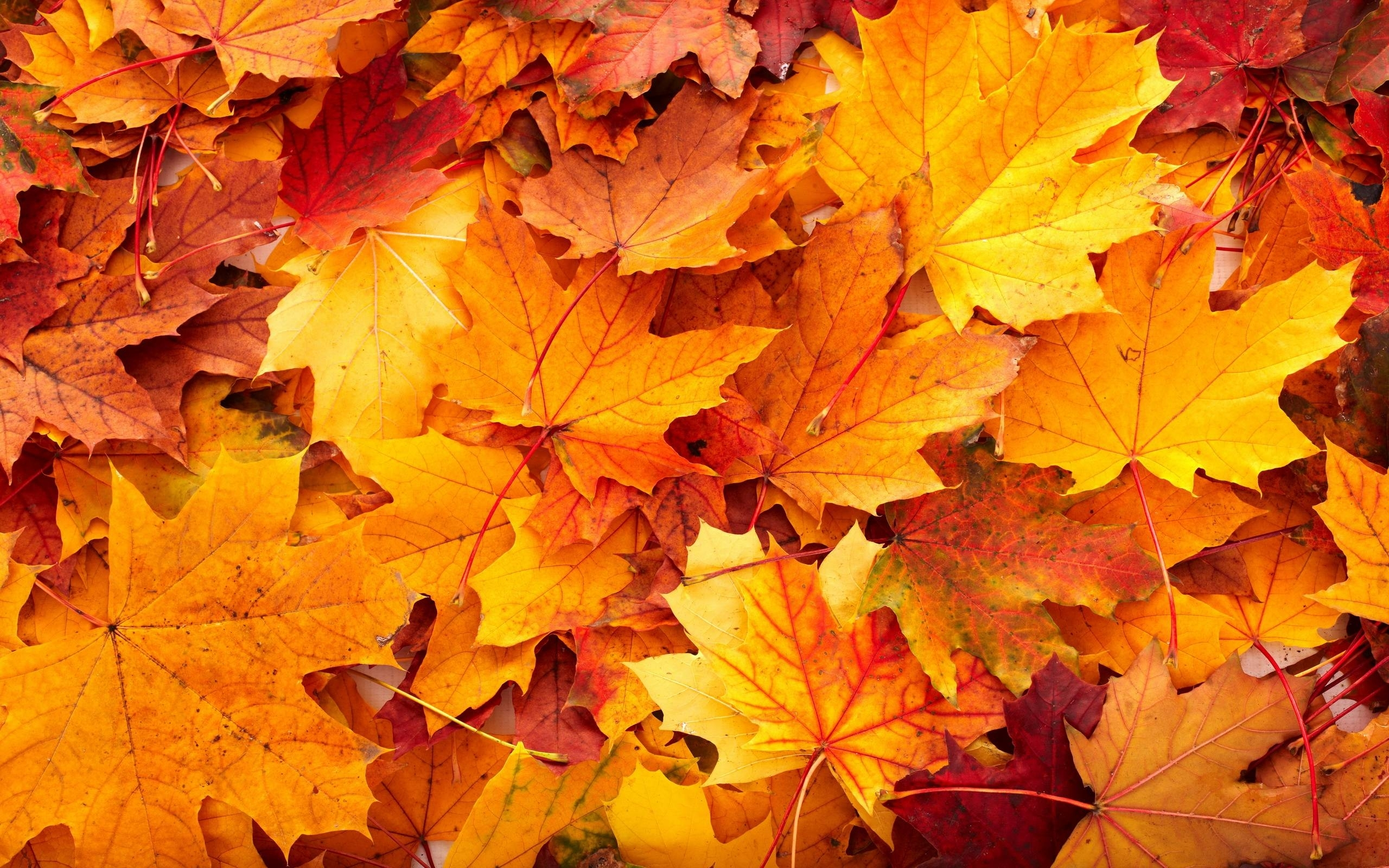 10 Most Popular Fall Leaves Desktop Wallpaper FULL HD 1920×1080 For PC Desktop
