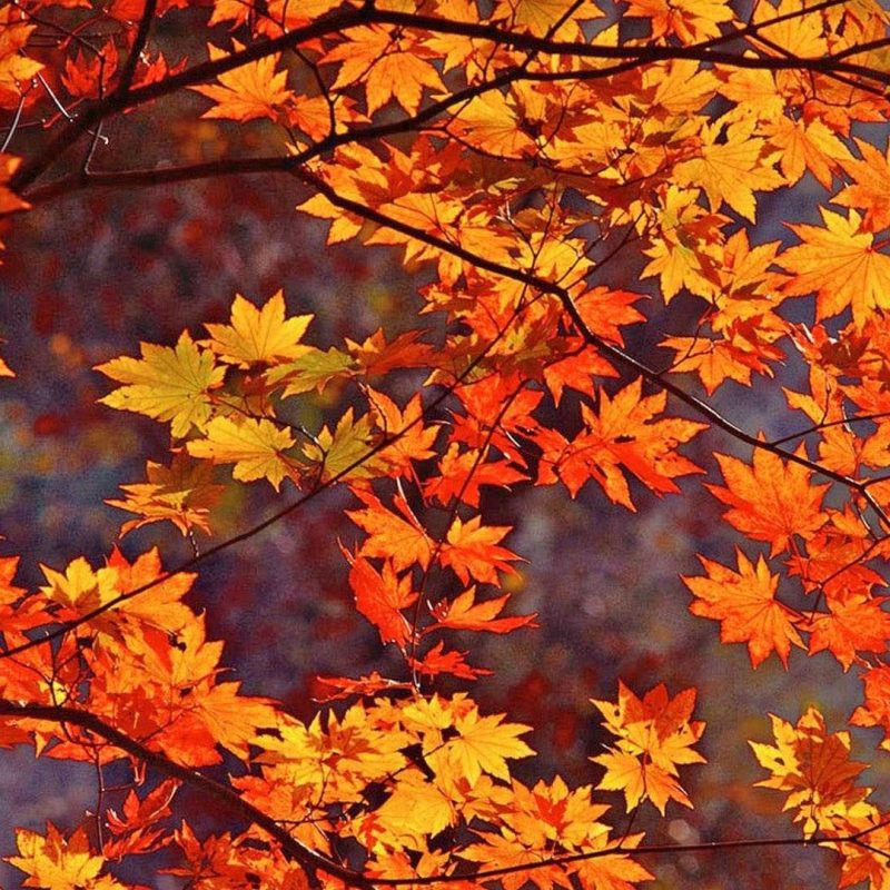 10 Top Fall Leaves Wallpaper Desktop FULL HD 1920×1080 For PC Background 2018 free download fall leaves schaffer company realtors wallpaper hd of computer 1 800x800