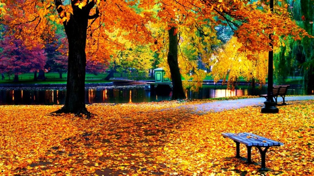 10 Top Fall Leaves Wallpaper For Desktop FULL HD 1080p For PC Background 2018 free download fall leaves wallpaper for iphone natures wallpapers pinterest 1024x576