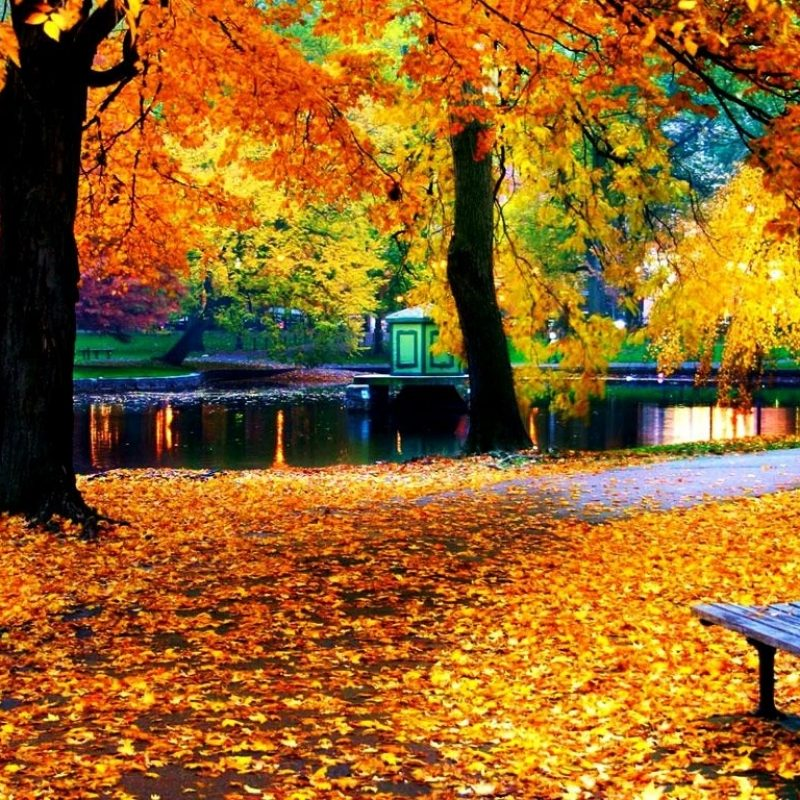 10 Latest Fall Leaves Hd Wallpaper FULL HD 1080p For PC Desktop 2018 free download fall leaves wallpaper for iphone natures wallpapers pinterest 4 800x800