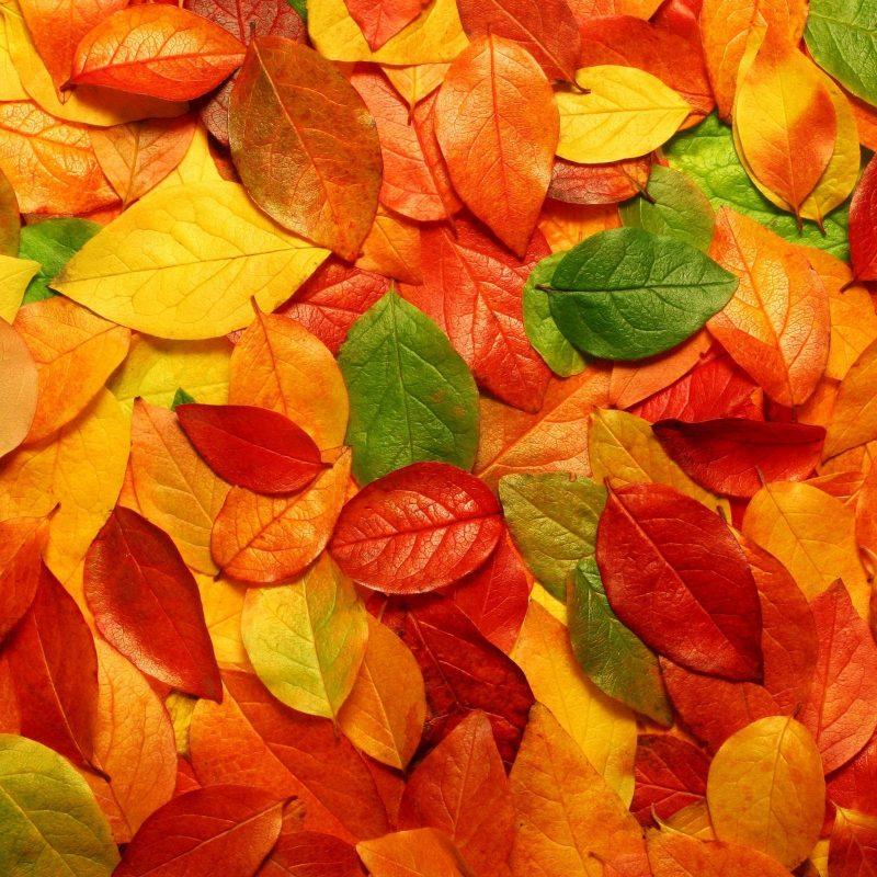 10 Best Fall Leaves Desktop Background FULL HD 1920×1080 For PC Desktop 2018 free download fall leaves wallpaper hd desktop background 800x800