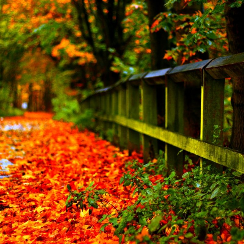 10 Top Fall Leaves Wallpaper Desktop FULL HD 1920×1080 For PC Background 2018 free download %name