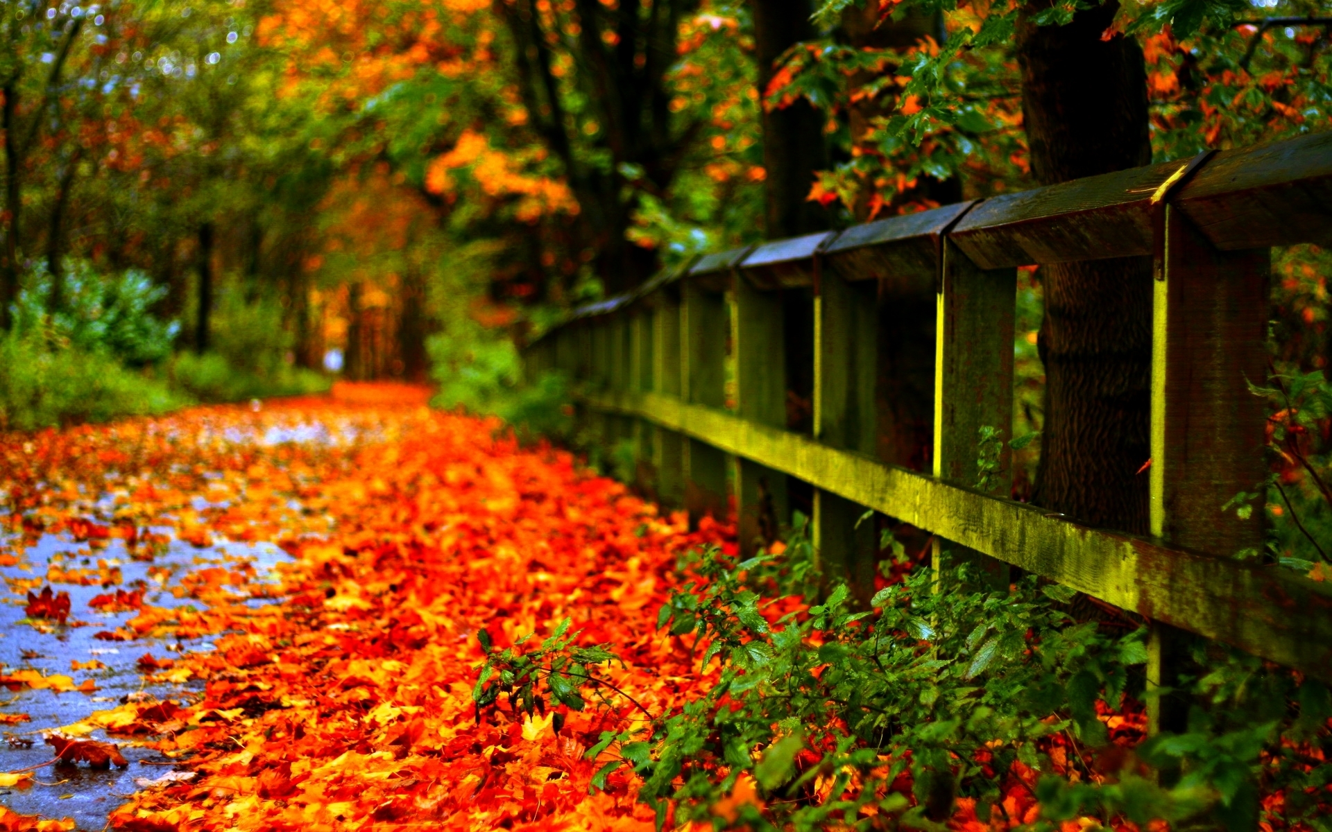 fall leaves wallpaper high quality resolution free download