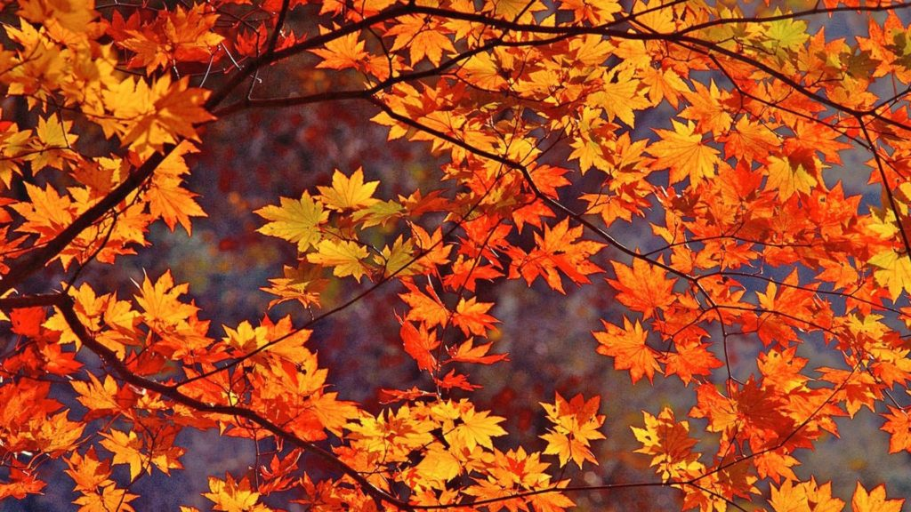 10 New Fall Colors Wallpaper Background FULL HD 1080p For PC Background 2018 free download fall leaves wallpapers wallpaper wiki 1024x576