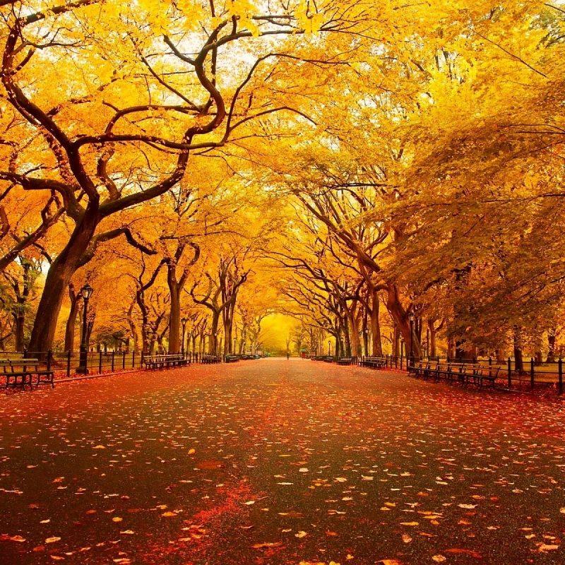 10 Best Fall Nature Desktop Background Full Hd 1080p For Pc Desktop