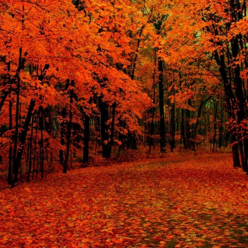 10 Most Popular Autumn Hd Wallpapers 1080P FULL HD 1080p For PC Desktop 2020 free download fall path wallpaper 1080p hd colors pinterest wallpaper paths 800x800