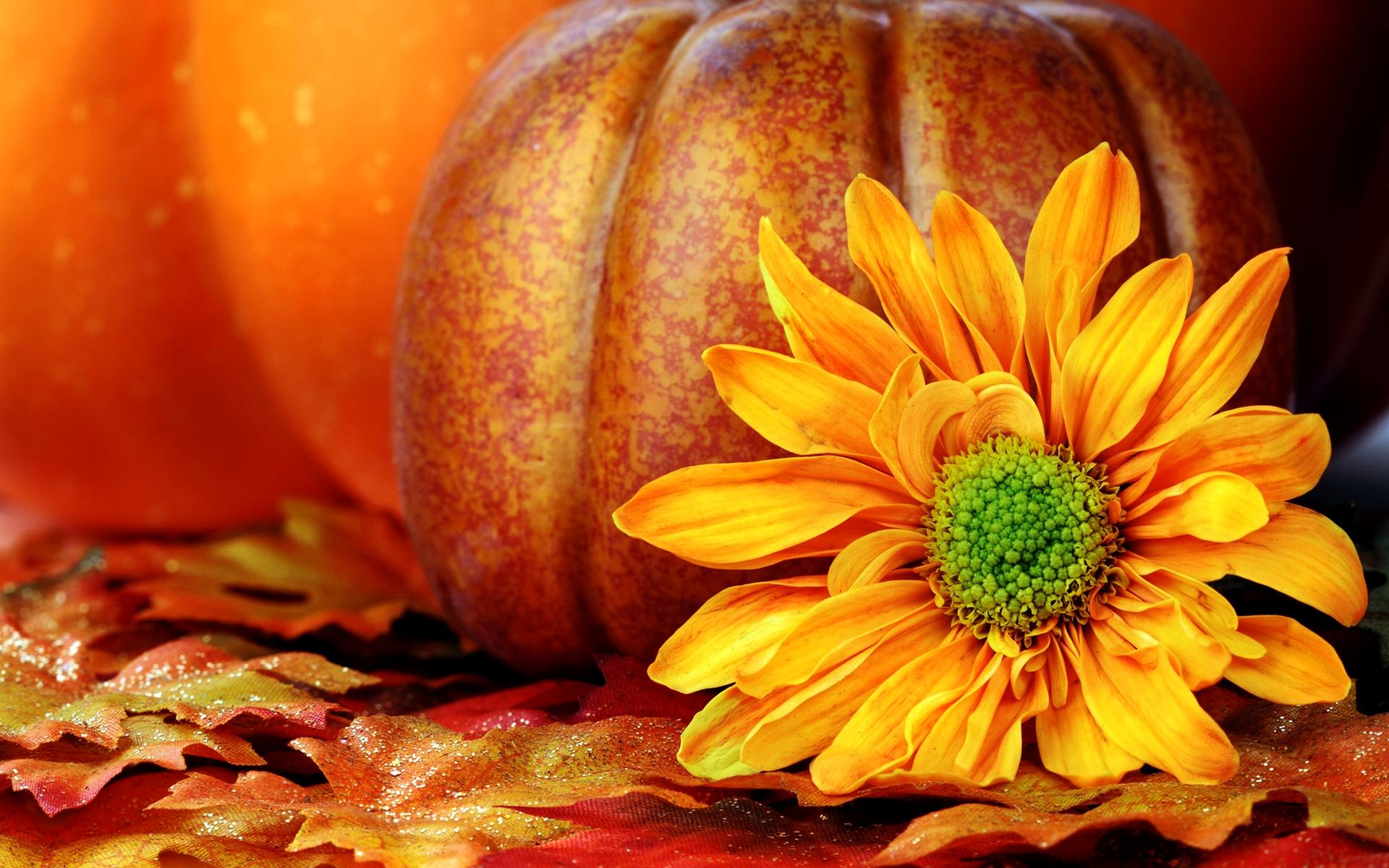 fall pumpkin desktop backgrounds hd wallpaper, background images