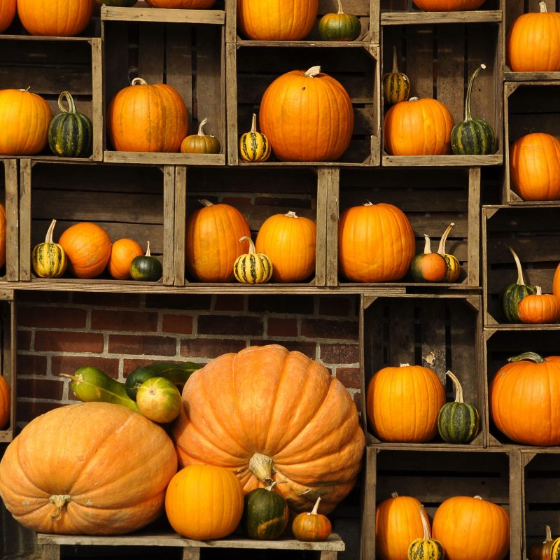 10 Top Fall Pumpkin Computer Backgrounds FULL HD 1080p For PC Desktop 2018 free download fall pumpkin pictures for desktop cyberuse 800x800