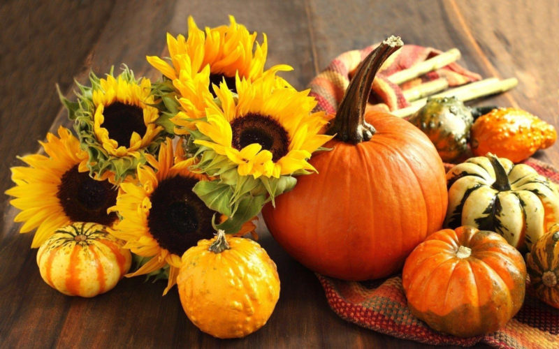 10 Best Fall Pumpkin Desktop Backgrounds FULL HD 1080p For PC Desktop 2020 free download fall pumpkin wallpapers wallpaper cave 2 800x500
