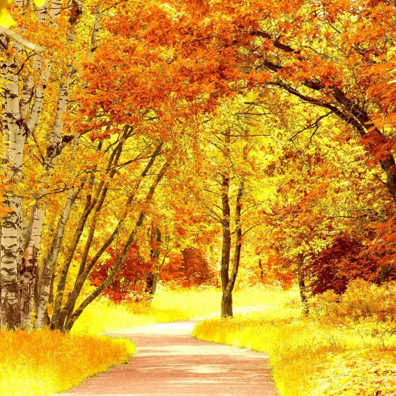 10 Top Images Of Fall Scenery FULL HD 1080p For PC Background 2018 free download fall scenery desktop wallpapers media file pixelstalk 800x800