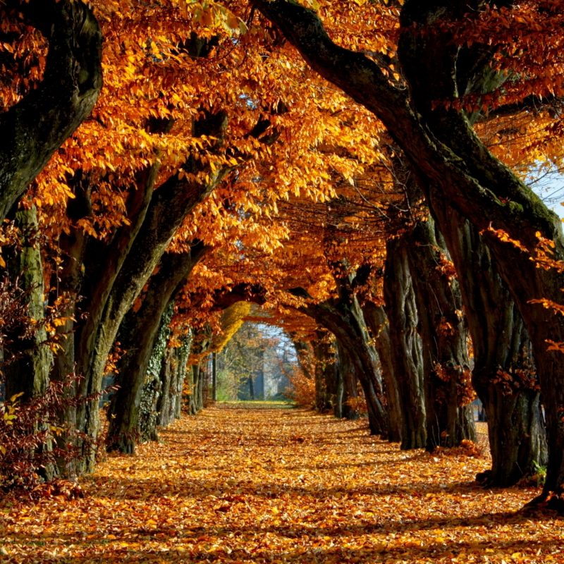 10 Top Images Of Fall Scenery FULL HD 1080p For PC Background 2018 free download fall scenery photo free download media file pixelstalk 800x800