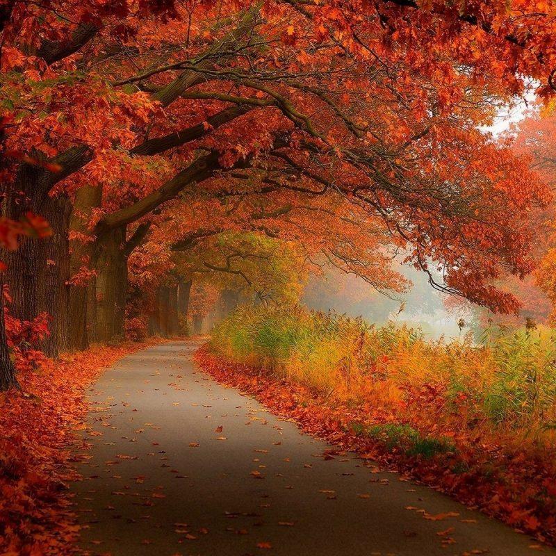 10 Top Fall Scenery Desktop Wallpapers FULL HD 1080p For PC Desktop 2018 free download fall scenery photo hd wallpaper wiki 800x800