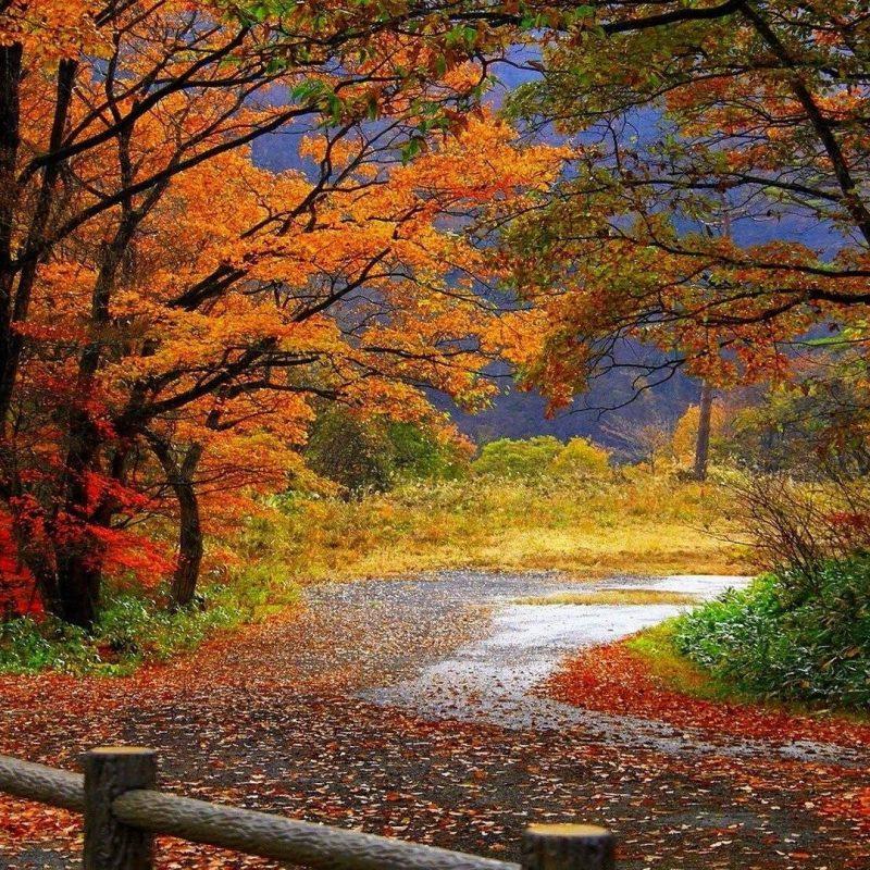10 Top Fall Scenery Desktop Wallpapers FULL HD 1080p For PC Desktop 2018 free download fall scenery wallpapers wallpaper cave 1 800x800