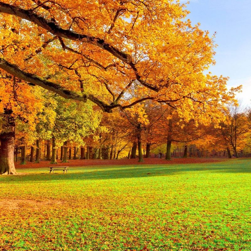 10 Top Images Of Fall Scenery FULL HD 1080p For PC Background 2018 free download fall scenery wallpapers wallpaper cave 3 800x800