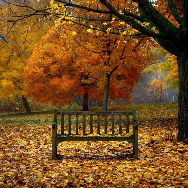 10 Most Popular Fall Scenes Desktop Backgrounds FULL HD 1920×1080 For PC Background 2018 free download fall scenes for desktop background season wallpaper pinterest 1 800x800