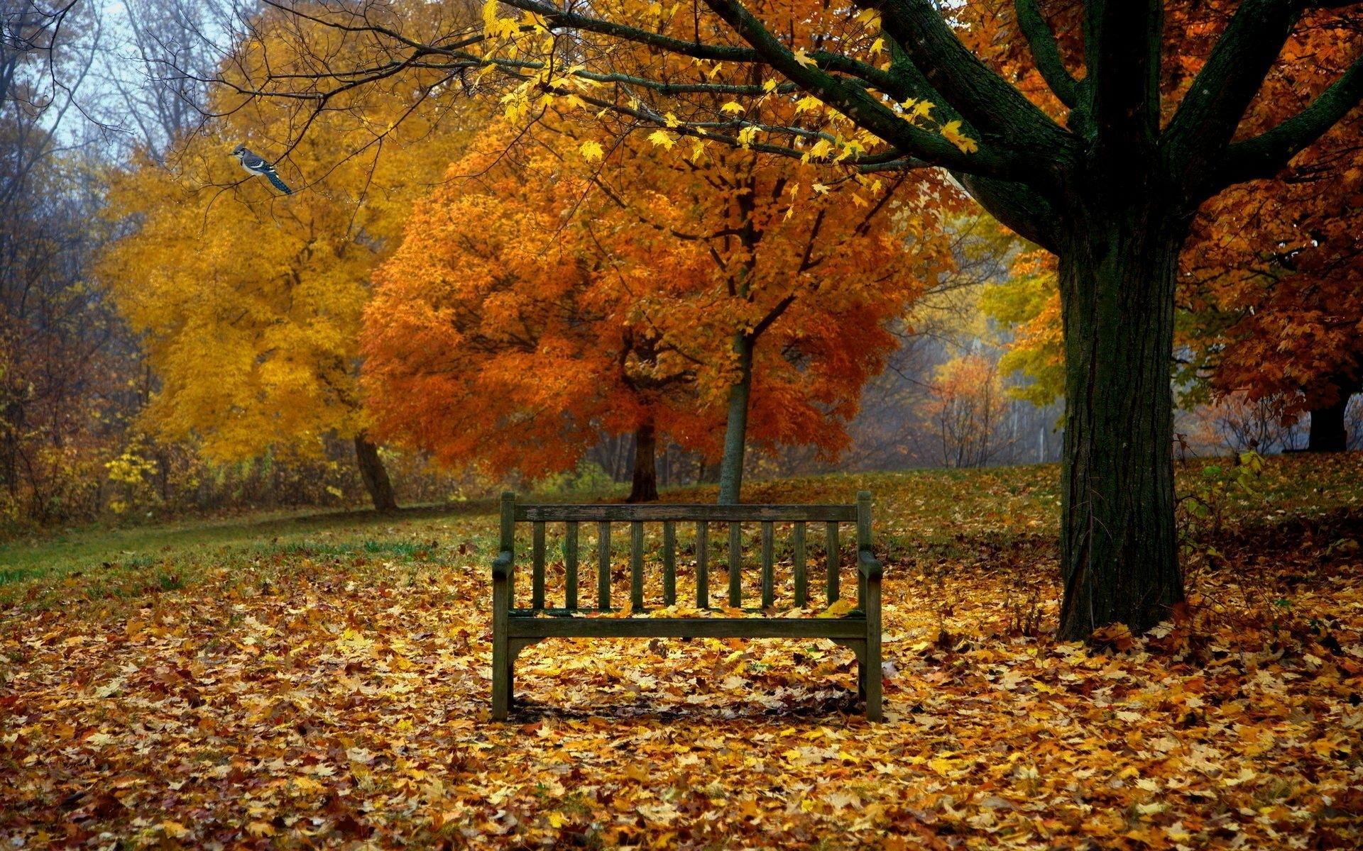 fall scenes for desktop background | season wallpaper | pinterest