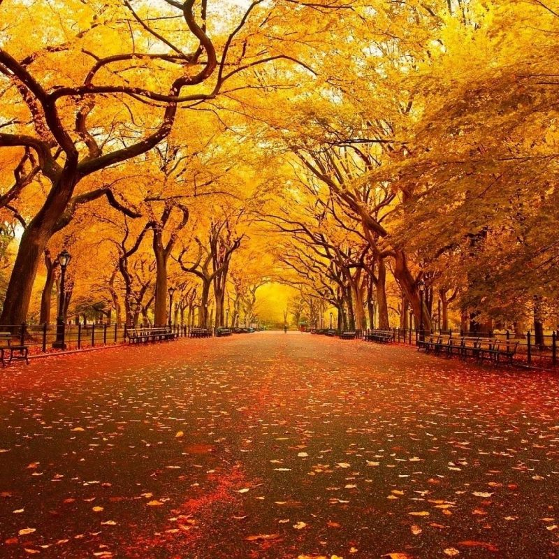 10 New Fall Screen Savers Free FULL HD 1920×1080 For PC Desktop 2018 free download fall screensavers and backgrounds free sharovarka pinterest 800x800