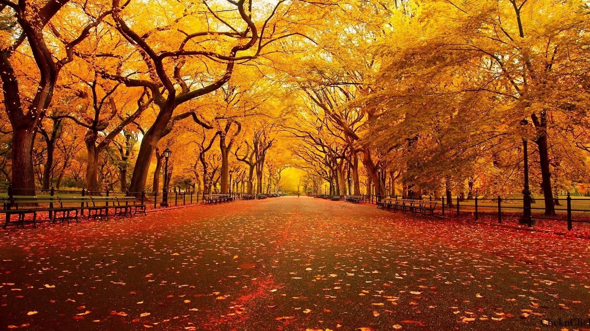 10 New Fall Screen Savers Free FULL HD 1920×1080 For PC Desktop