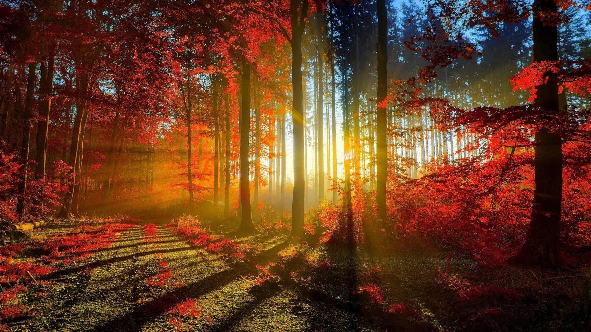 fall screensavers and wallpaper (49+ images)