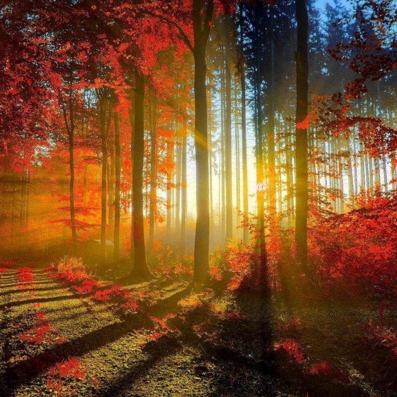 10 New Fall Screen Savers Free FULL HD 1920×1080 For PC Desktop 2018 free download fall screensavers and wallpaper 49 images 800x800