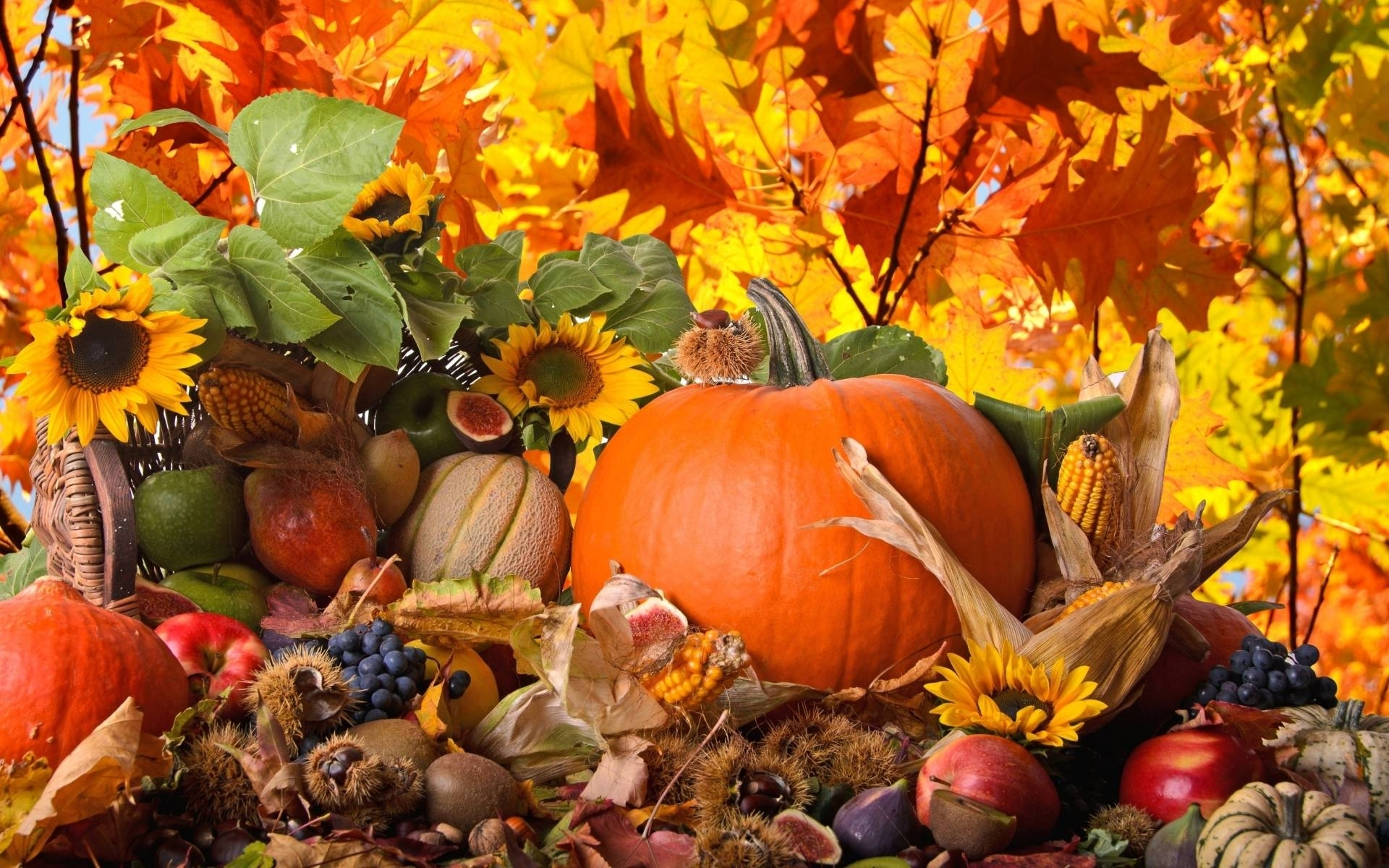 fall thanksgiving wallpaper background for hd and widescreen