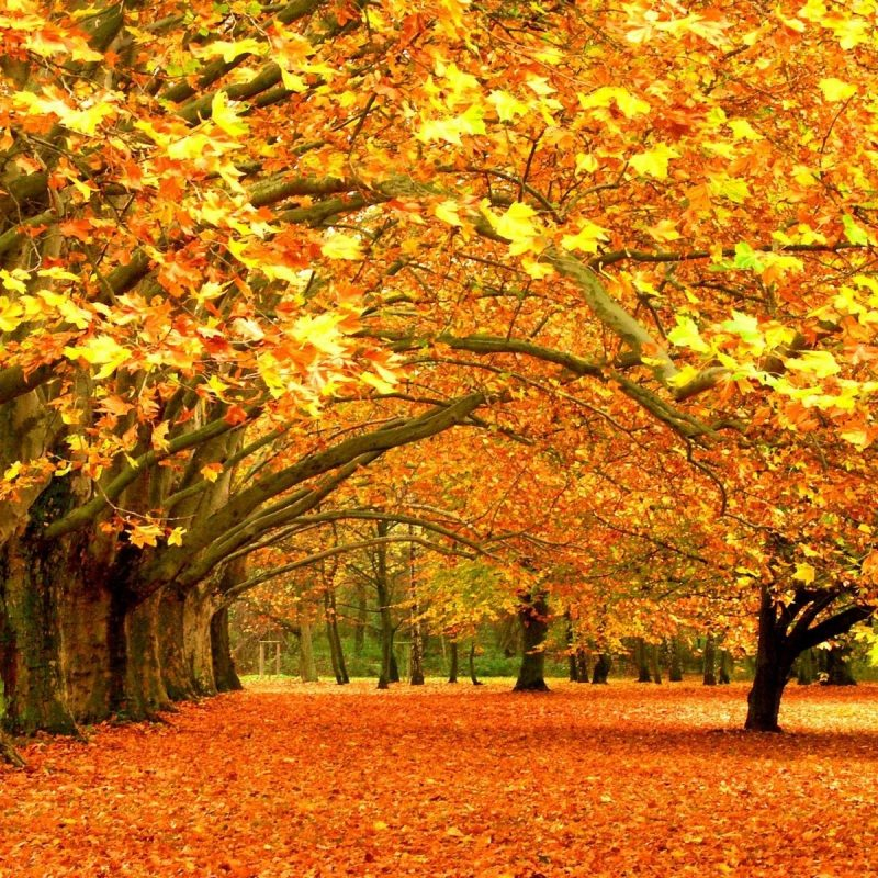 10 Most Popular Photos Of Fall Trees FULL HD 1920×1080 For PC Background 2018 free download fall trees wallpaper 70 images 1 800x800
