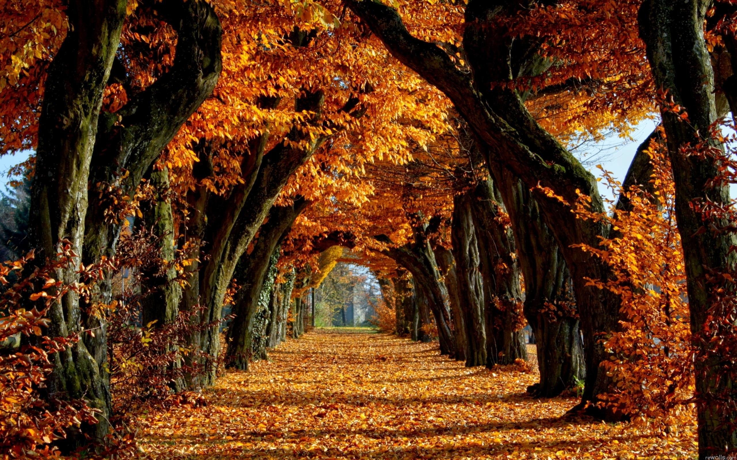 fall trees wallpaper (70+ images)