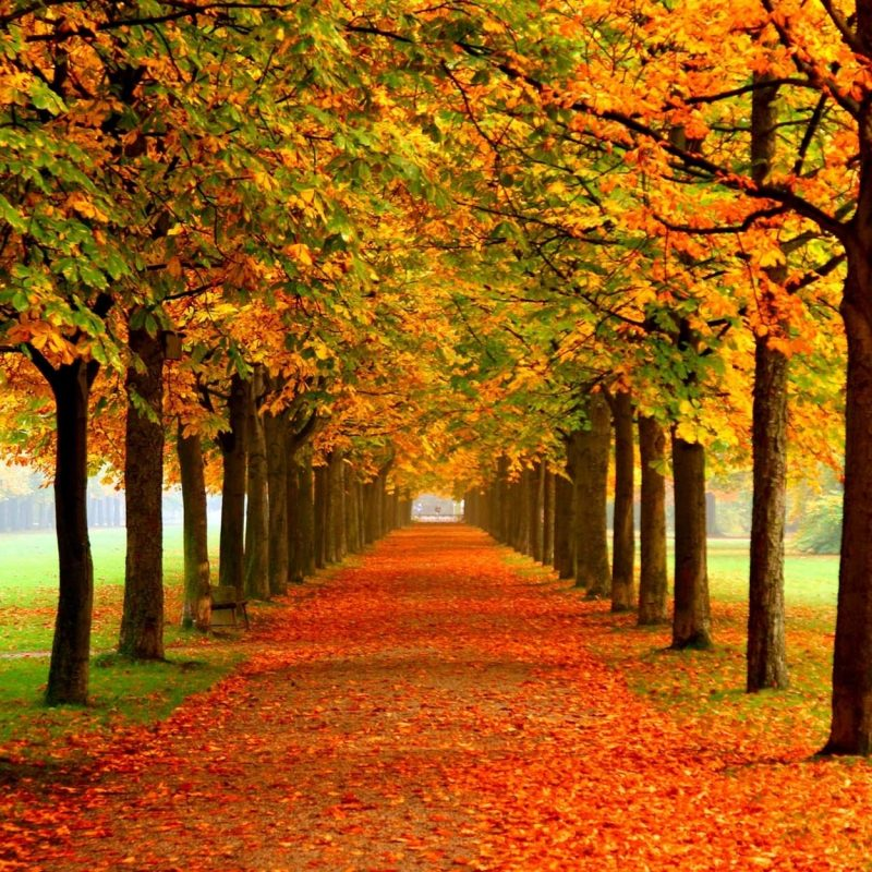 10 New Fall Screen Savers Free FULL HD 1920×1080 For PC Desktop 2018 free download fall wallpaper and screensavers 54 images 800x800