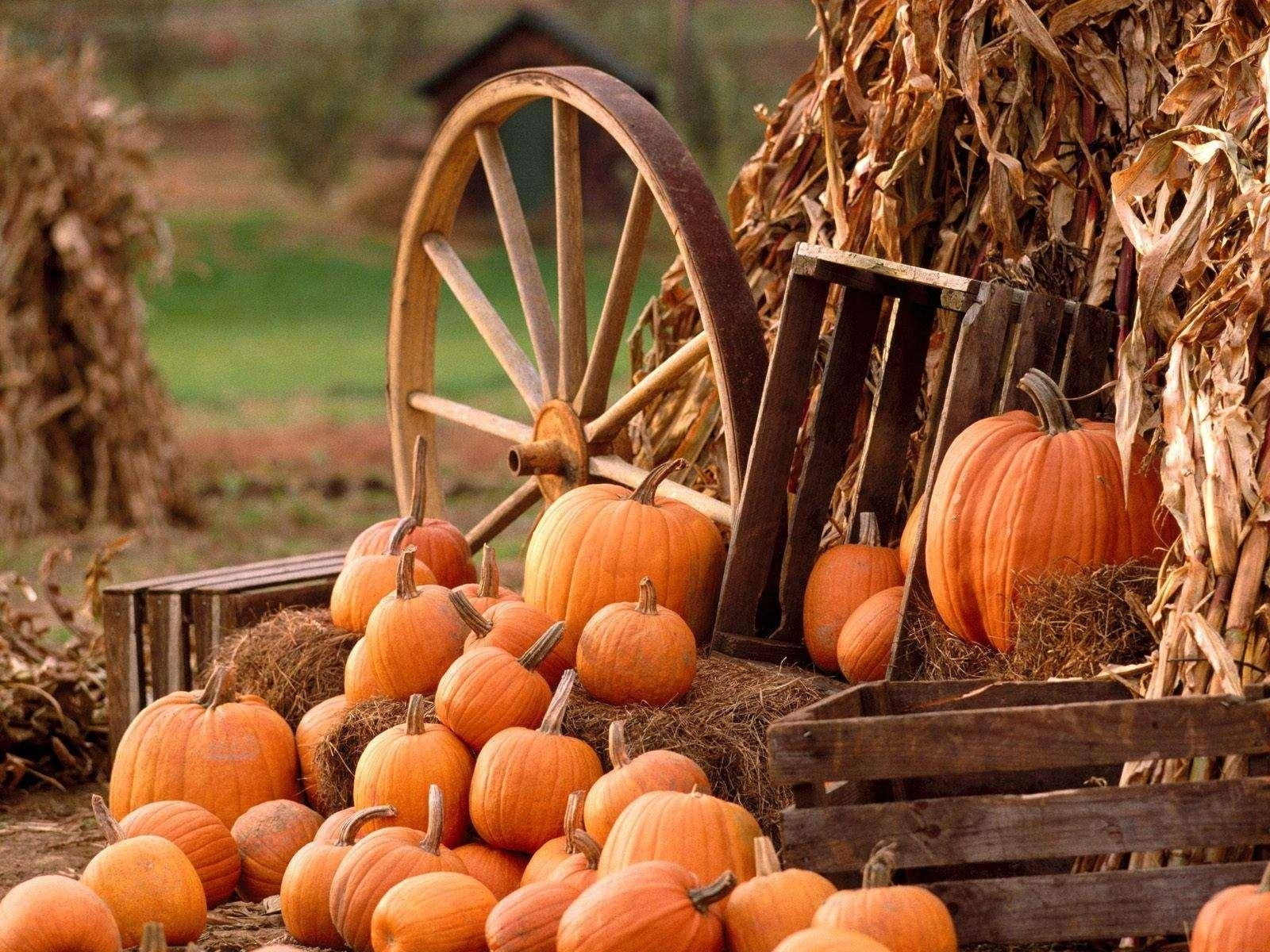 10 Latest Fall Wallpaper With Pumpkins FULL HD 1920×1080 For PC Background