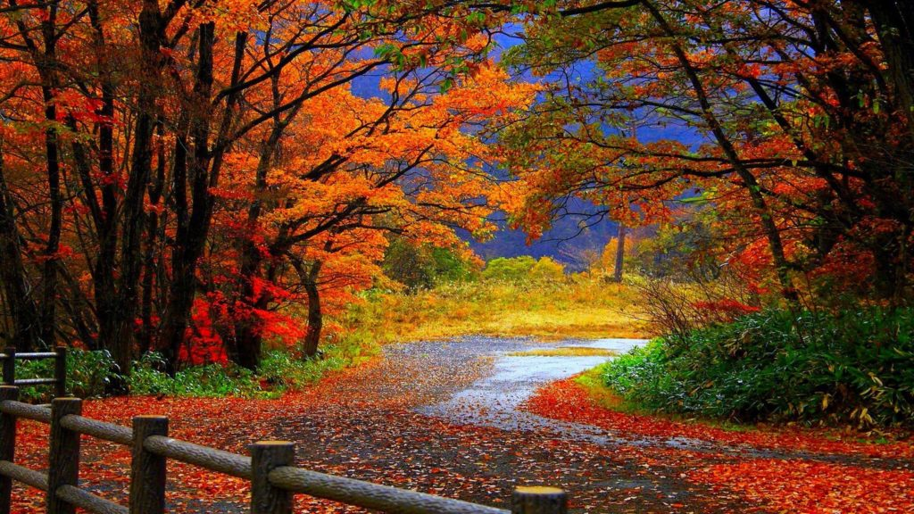 10 Best High Definition Autumn Wallpaper FULL HD 1080p For PC Background 2020 free download fall wallpaper high definition natures wallpapers pinterest 1024x576