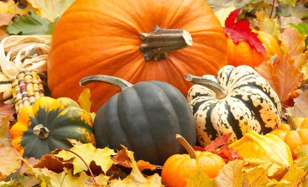 10 Latest Fall Wallpaper With Pumpkins FULL HD 1920×1080 For PC Background 2018 free download fall wallpapers with pumpkins modafinilsale 1024x621