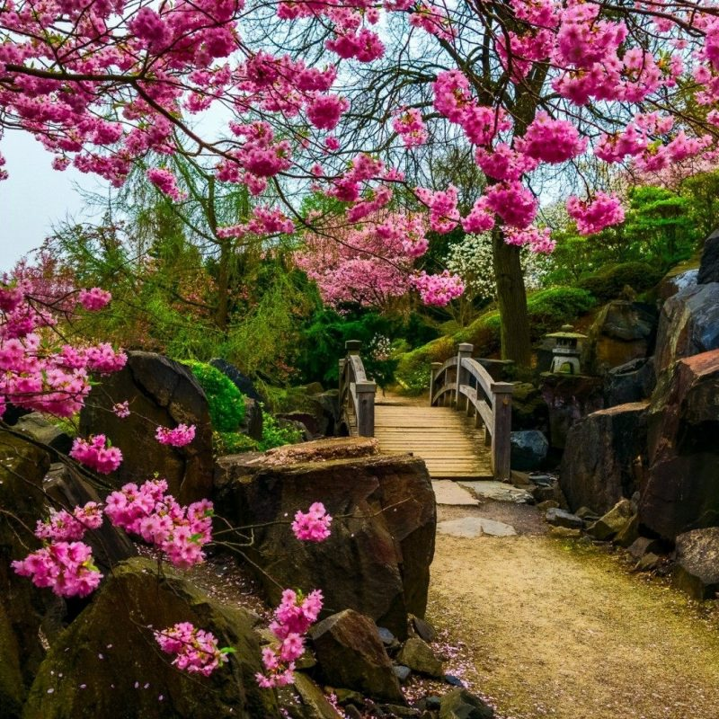 10 Latest Japanese Garden Hd Wallpaper FULL HD 1920x1080 For PC Background 2018 Free