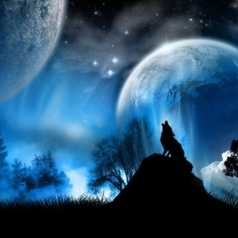 10 New Cool Wolf Desktop Backgrounds FULL HD 1080p For PC Background 2020 free download fantasy wolf planet blue stars moon a dreamy world wallpaper 800x800