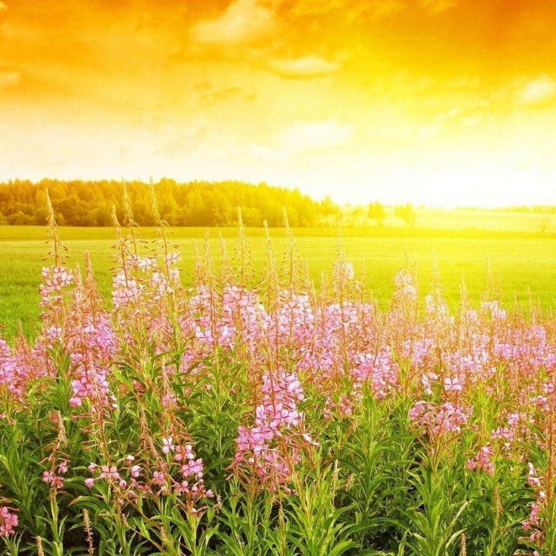 10 Most Popular Field Of Flowers Background FULL HD 1920×1080 For PC Background 2021 free download field flowers wallpaper hd desktop background 800x800