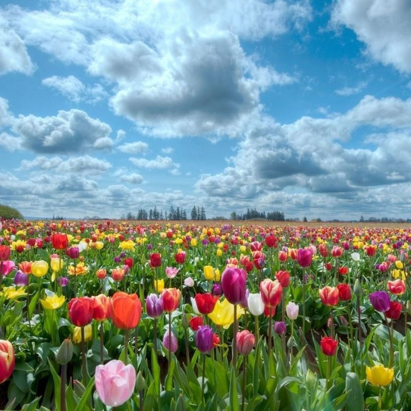 10 Most Popular Field Of Flowers Background FULL HD 1920×1080 For PC Background 2021 free download field of flowers background hd wallpapers field of flowers 800x800