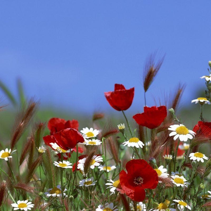 10 Latest Field Of Flowers Wallpaper FULL HD 1080p For PC Background 2018 free download field of flowers summer e29da4 4k hd desktop wallpaper for 4k ultra hd tv 1 800x800